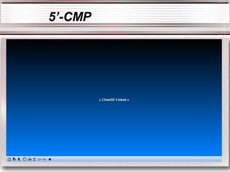 5-CMP