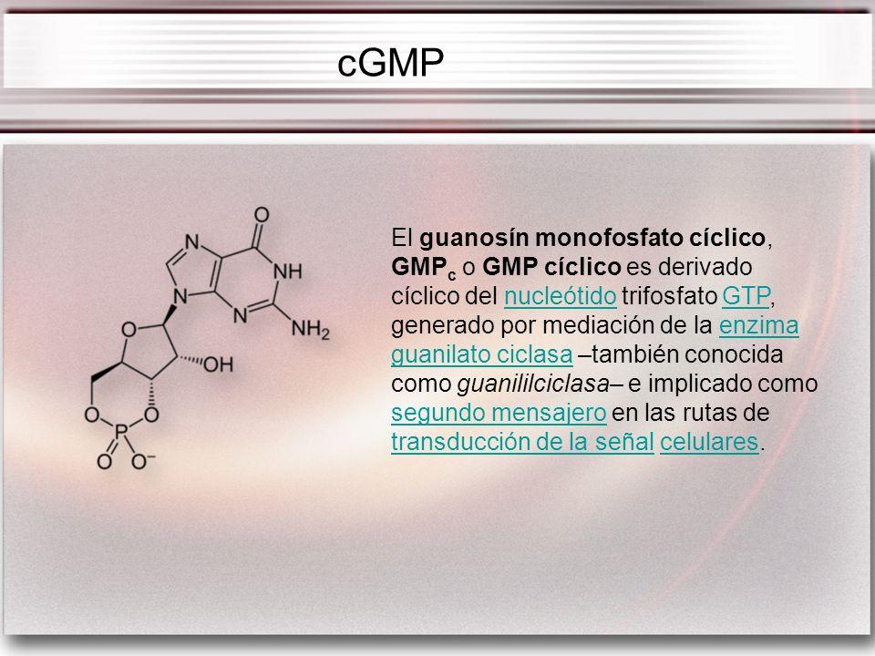 El guanosín monofosfato cíclico, GMP c o GMP cíclico es derivado cíclico del nucleótido trifosfato GTP, generado por mediación de la enzima guanilato