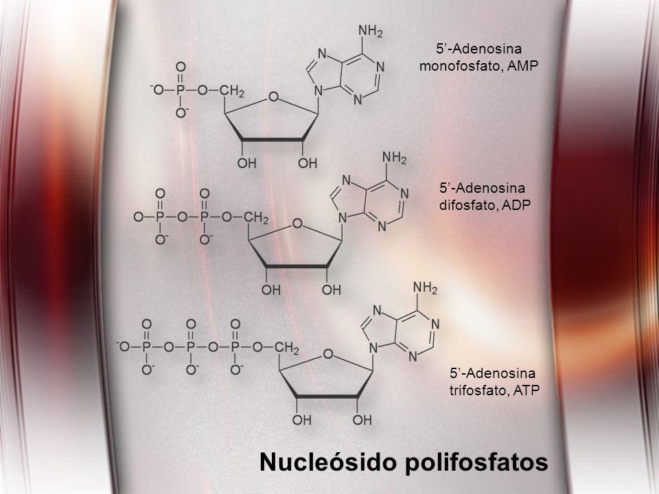 Nucleósido polifosfatos 5-Adenosina monofosfato, AMP 5-Adenosina difosfato, ADP 5-Adenosina trifosfato, ATP