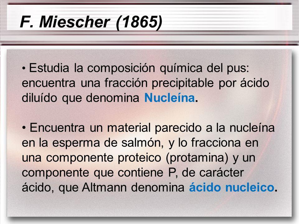 Estudia la composición química del pus: encuentra una fracción precipitable por ácido diluído que denomina Nucleína. Encuentra un material parecido a