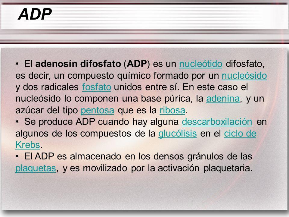 El adenosín difosfato (ADP) es un nucleótido difosfato, es decir, un compuesto químico formado por un nucleósido y dos radicales fosfato unidos entre