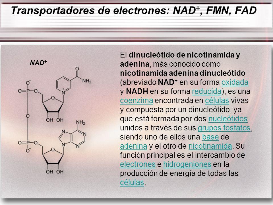 El dinucleótido de nicotinamida y adenina, más conocido como nicotinamida adenina dinucleótido (abreviado NAD + en su forma oxidada y NADH en su forma