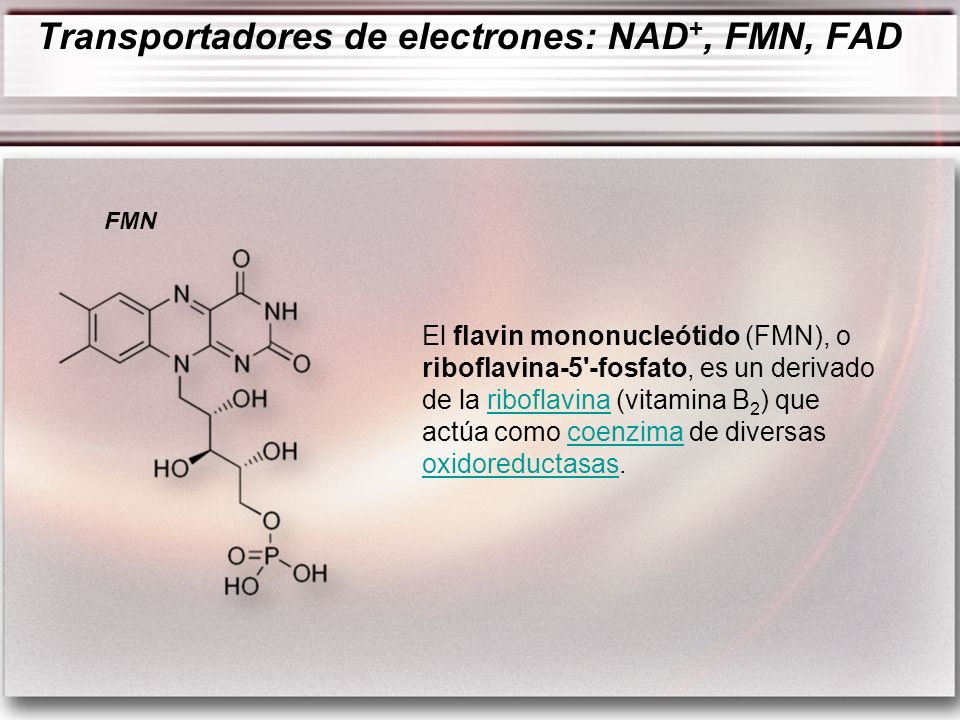 El flavin mononucleótido (FMN), o riboflavina-5'-fosfato, es un derivado de la riboflavina (vitamina B 2 ) que actúa como coenzima de diversas oxidore