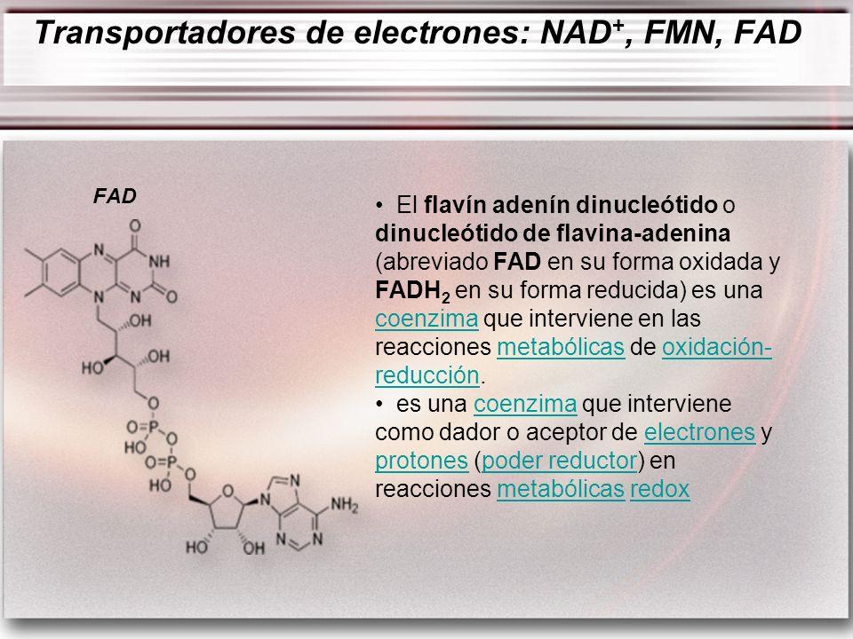 El flavín adenín dinucleótido o dinucleótido de flavina-adenina (abreviado FAD en su forma oxidada y FADH 2 en su forma reducida) es una coenzima que