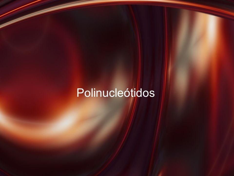 Polinucleótidos