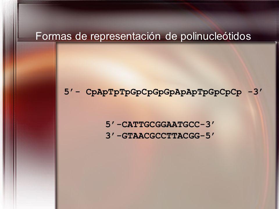 5- CpApTpTpGpCpGpGpApApTpGpCpCp -3 5-CATTGCGGAATGCC-3 3-GTAACGCCTTACGG-5 Formas de representación de polinucleótidos