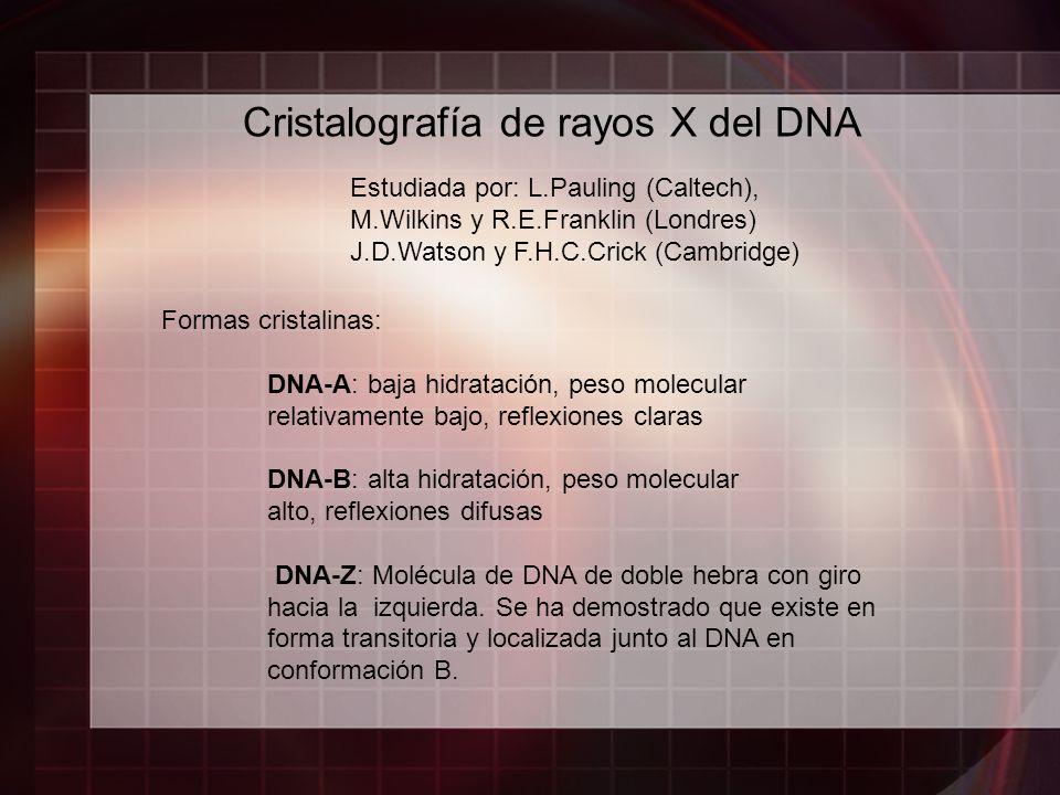 Cristalografía de rayos X del DNA Formas cristalinas: DNA-A: baja hidratación, peso molecular relativamente bajo, reflexiones claras DNA-B: alta hidra
