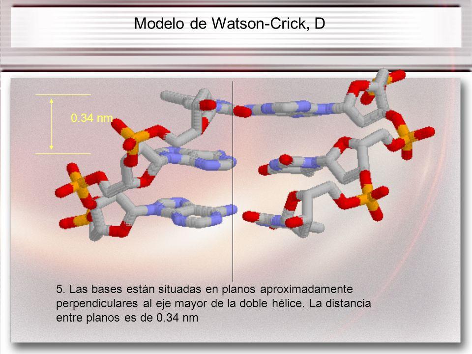 5. Las bases están situadas en planos aproximadamente perpendiculares al eje mayor de la doble hélice. La distancia entre planos es de 0.34 nm Modelo