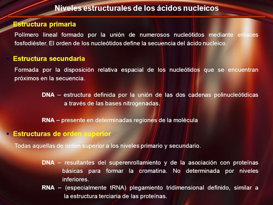 Niveles estructurales de los ácidos nucleicos Polímero lineal formado por la unión de numerosos nucleótidos mediante enlaces fosfodiéster. El orden de