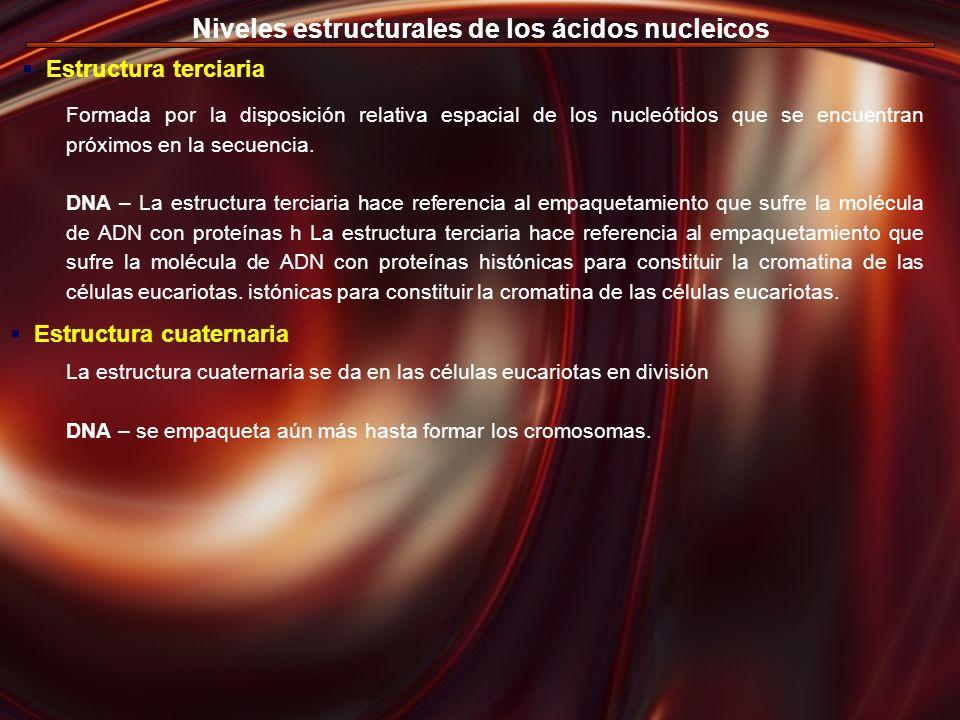 Niveles estructurales de los ácidos nucleicos Estructura terciaria Estructura cuaternaria La estructura cuaternaria se da en las células eucariotas en