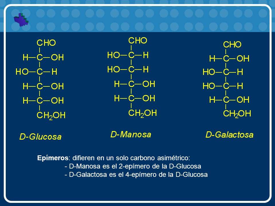 Epímeros: difieren en un solo carbono asimétrico: - D-Manosa es el 2-epímero de la D-Glucosa - D-Galactosa es el 4-epímero de la D-Glucosa