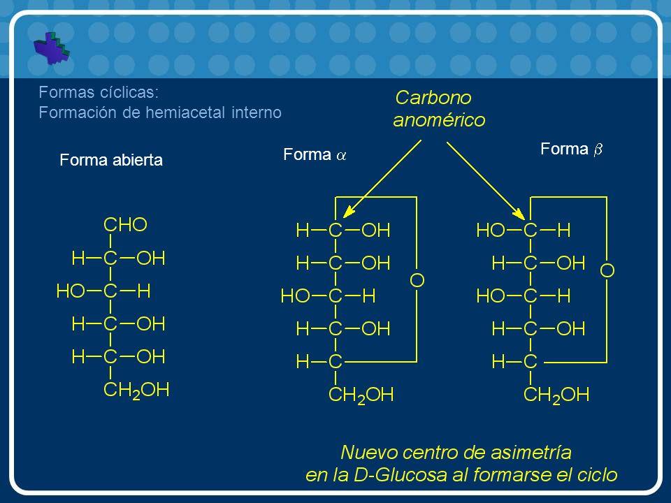 Forma abierta Forma Formas cíclicas: Formación de hemiacetal interno