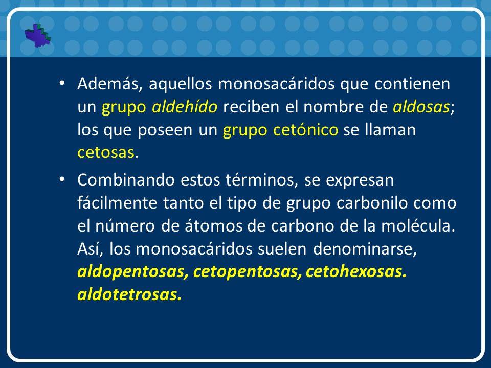 Además, aquellos monosacáridos que contienen un grupo aldehído reciben el nombre de aldosas; los que poseen un grupo cetónico se llaman cetosas. Combi