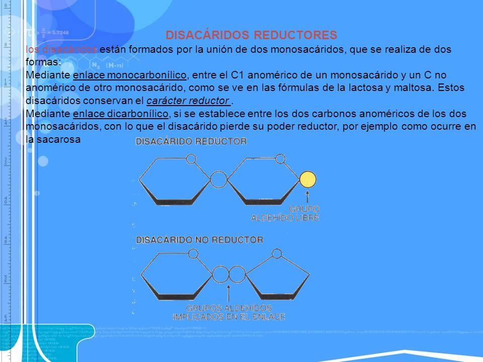 DISACÁRIDOS REDUCTORES los disacáridos están formados por la unión de dos monosacáridos, que se realiza de dos formas: Mediante enlace monocarbonílico
