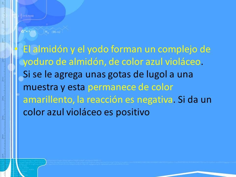 El almidón y el yodo forman un complejo de yoduro de almidón, de color azul violáceo. Si se le agrega unas gotas de lugol a una muestra y esta permane