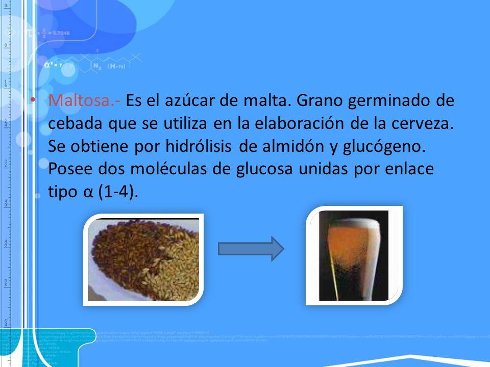 Maltosa.- Es el azúcar de malta. Grano germinado de cebada que se utiliza en la elaboración de la cerveza. Se obtiene por hidrólisis de almidón y gluc