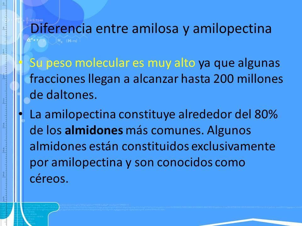 Diferencia entre amilosa y amilopectina Su peso molecular es muy alto ya que algunas fracciones llegan a alcanzar hasta 200 millones de daltones. La a