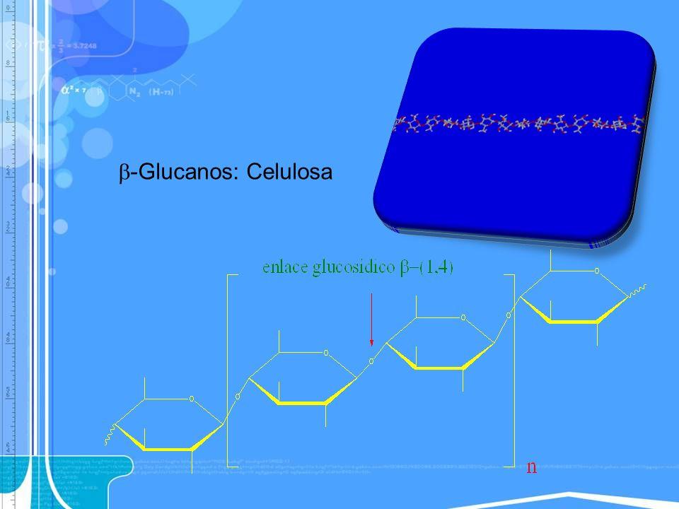 -Glucanos: Celulosa