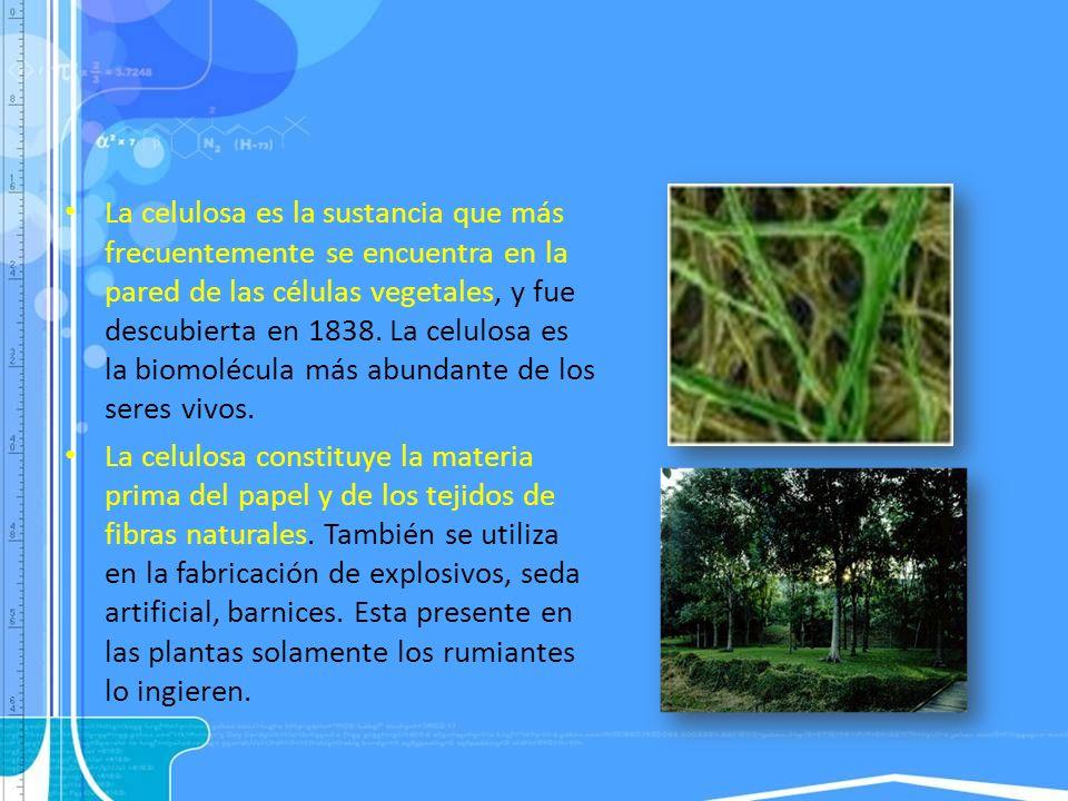 La celulosa es la sustancia que más frecuentemente se encuentra en la pared de las células vegetales, y fue descubierta en 1838. La celulosa es la bio