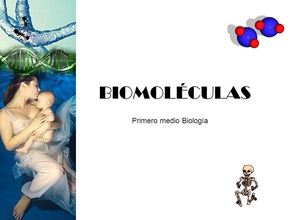 BIOMOLÉCULAS Primero medio Biología
