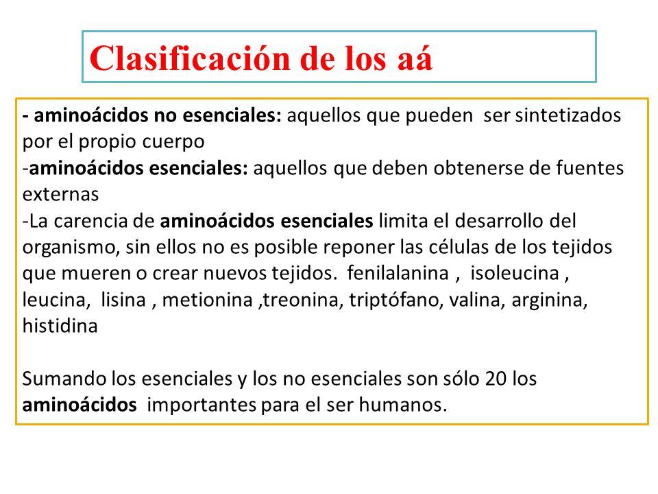 - aminoácidos no esenciales: aquellos que pueden ser sintetizados por el propio cuerpo -aminoácidos esenciales: aquellos que deben obtenerse de fuente