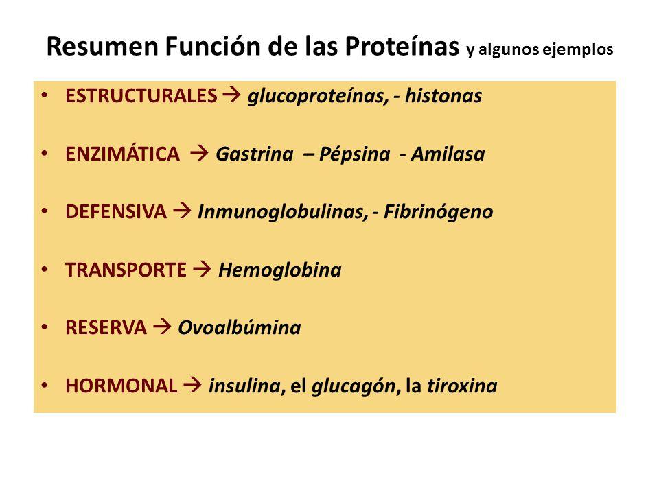 Resumen Función de las Proteínas y algunos ejemplos ESTRUCTURALES glucoproteínas, - histonas ENZIMÁTICA Gastrina – Pépsina - Amilasa DEFENSIVA Inmunog