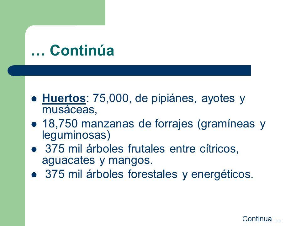 … Continúa Huertos: 75,000, de pipiánes, ayotes y musáceas, 18,750 manzanas de forrajes (gramíneas y leguminosas) 375 mil árboles frutales entre cítri