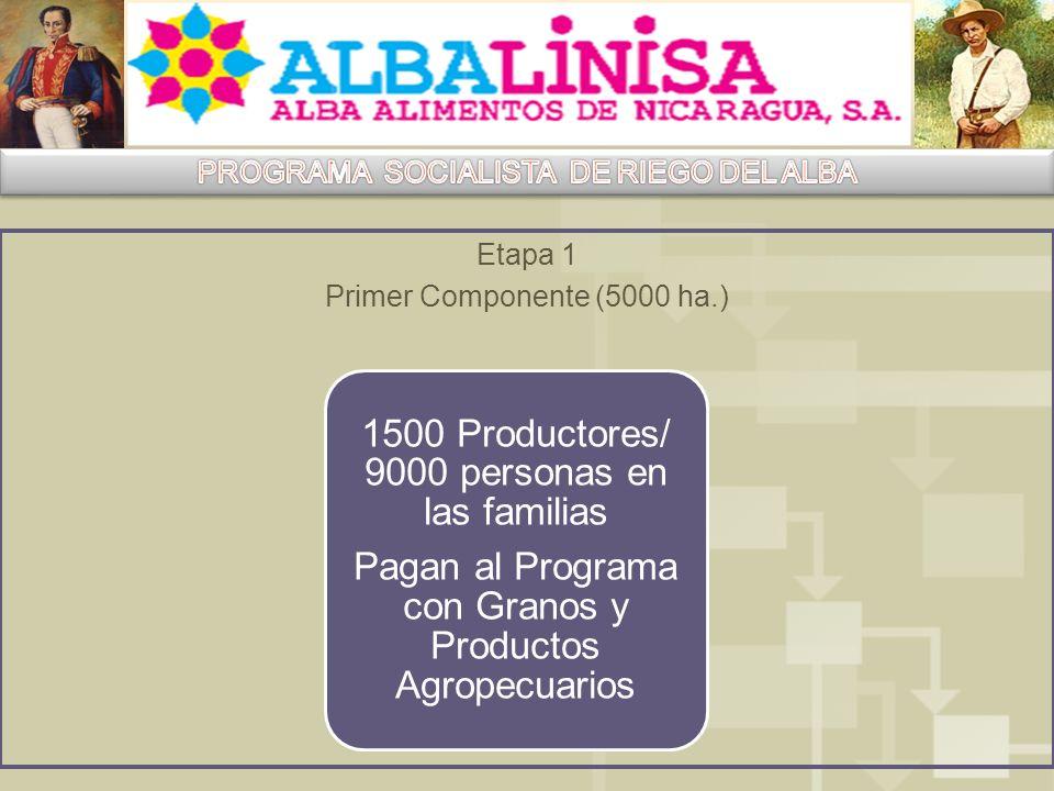 Etapa 1 Primer Componente (5000 ha.) 1500 Productores/ 9000 personas en las familias Pagan al Programa con Granos y Productos Agropecuarios