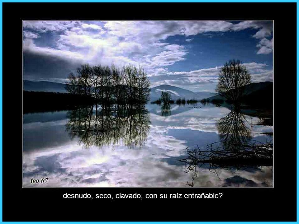 de Asturias, ya sin ramaje,