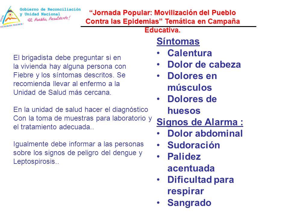Síntomas Calentura Dolor de cabeza Dolores en músculos Dolores de huesos Signos de Alarma : Dolor abdominal Sudoración Palidez acentuada Dificultad pa