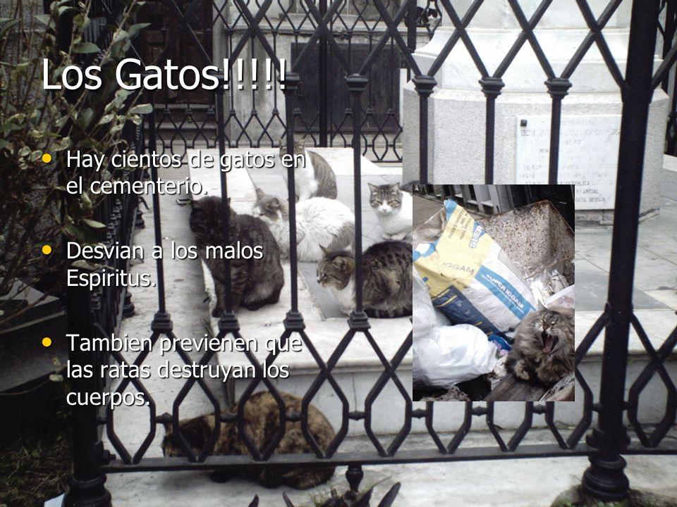 Los Gatos!!!!! Hay cientos de gatos en el cementerio. Hay cientos de gatos en el cementerio. Desvian a los malos Espiritus. Desvian a los malos Espiri