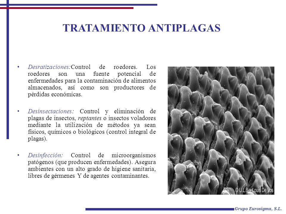 TRATAMIENTO ANTIPLAGAS Grupo Eurosigma, S.L. Desratizaciones:Control de roedores. Los roedores son una fuente potencial de enfermedades para la contam