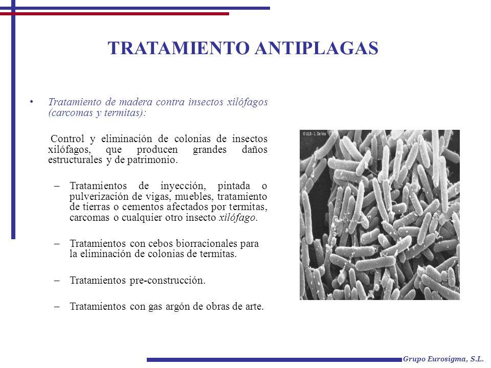 TRATAMIENTO ANTIPLAGAS Grupo Eurosigma, S.L. Tratamiento de madera contra insectos xilófagos (carcomas y termitas): Control y eliminación de colonias