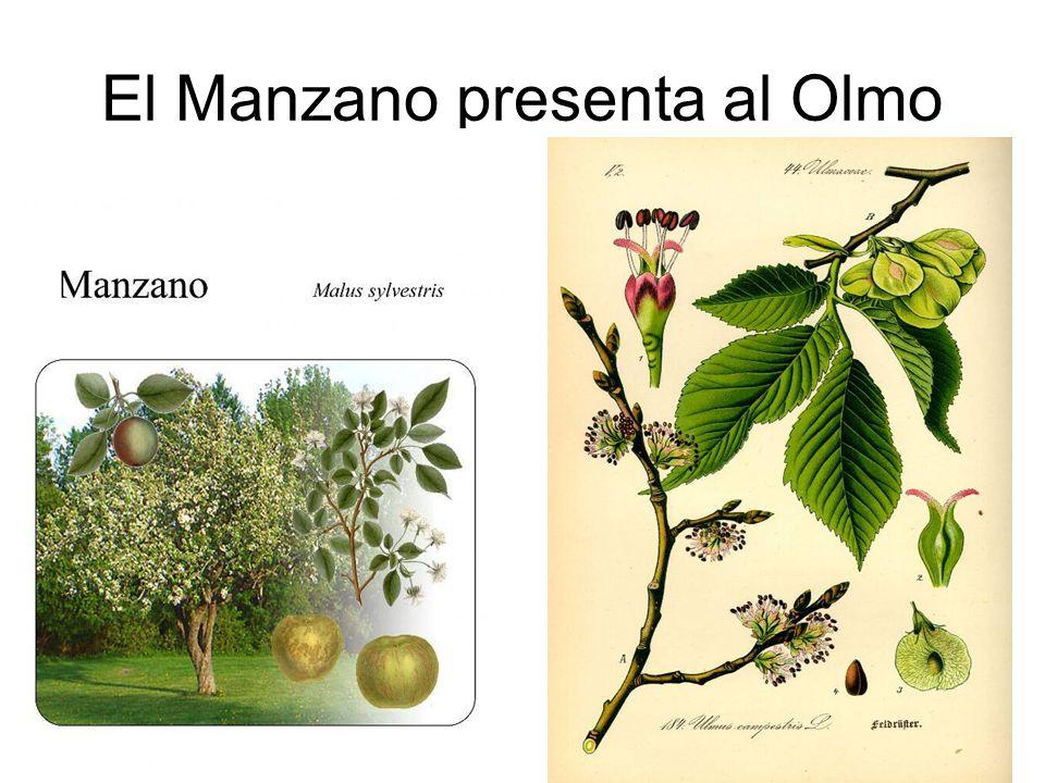El Manzano presenta al Olmo