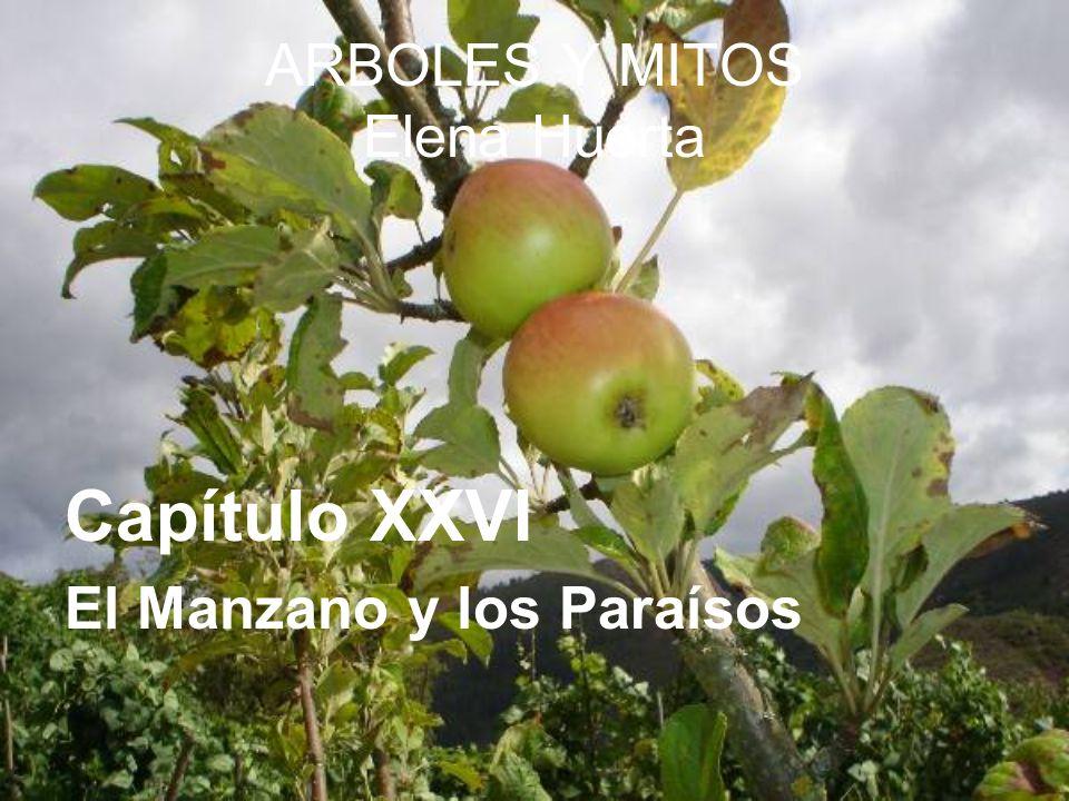 ARBOLES Y MITOS Elena Huerta Capítulo XXVI El Manzano y los Paraísos
