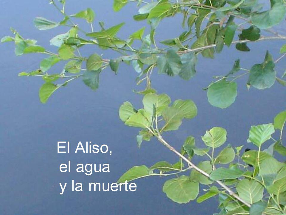 El Aliso, el agua y la muerte