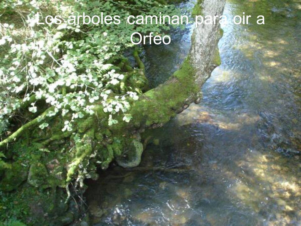 Los árboles caminan para oir a Orfeo