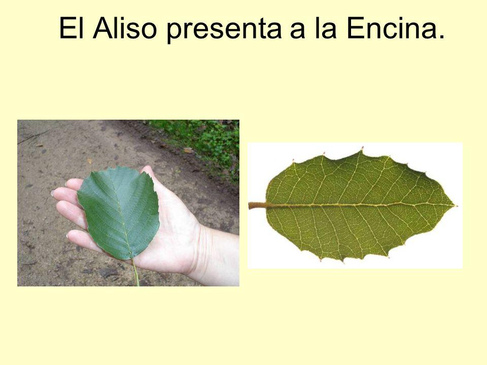 El Aliso presenta a la Encina.