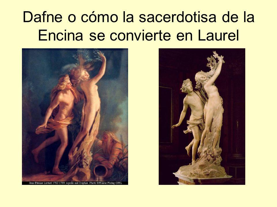 Dafne o cómo la sacerdotisa de la Encina se convierte en Laurel