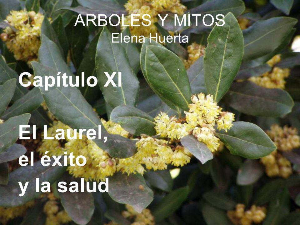 ARBOLES Y MITOS Elena Huerta Capítulo XI El Laurel, el éxito y la salud