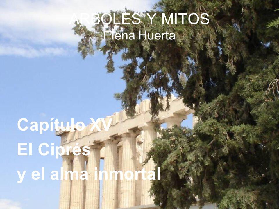 ARBOLES Y MITOS Elena Huerta Capítulo XV El Ciprés y el alma inmortal