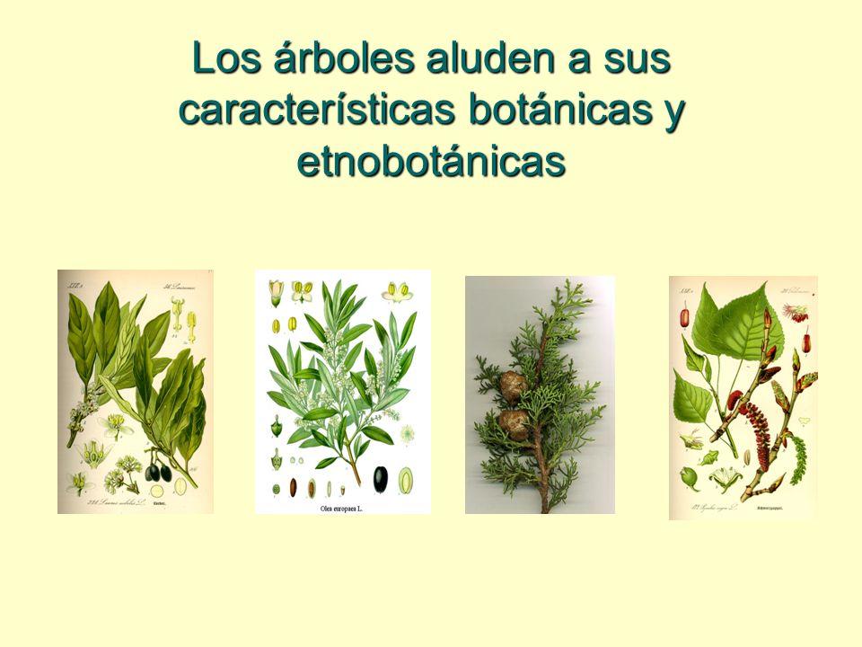 Los árboles aluden a sus características botánicas y etnobotánicas