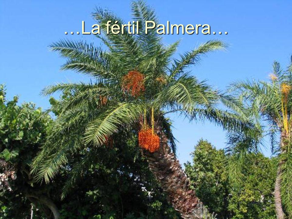 …La fértil Palmera…