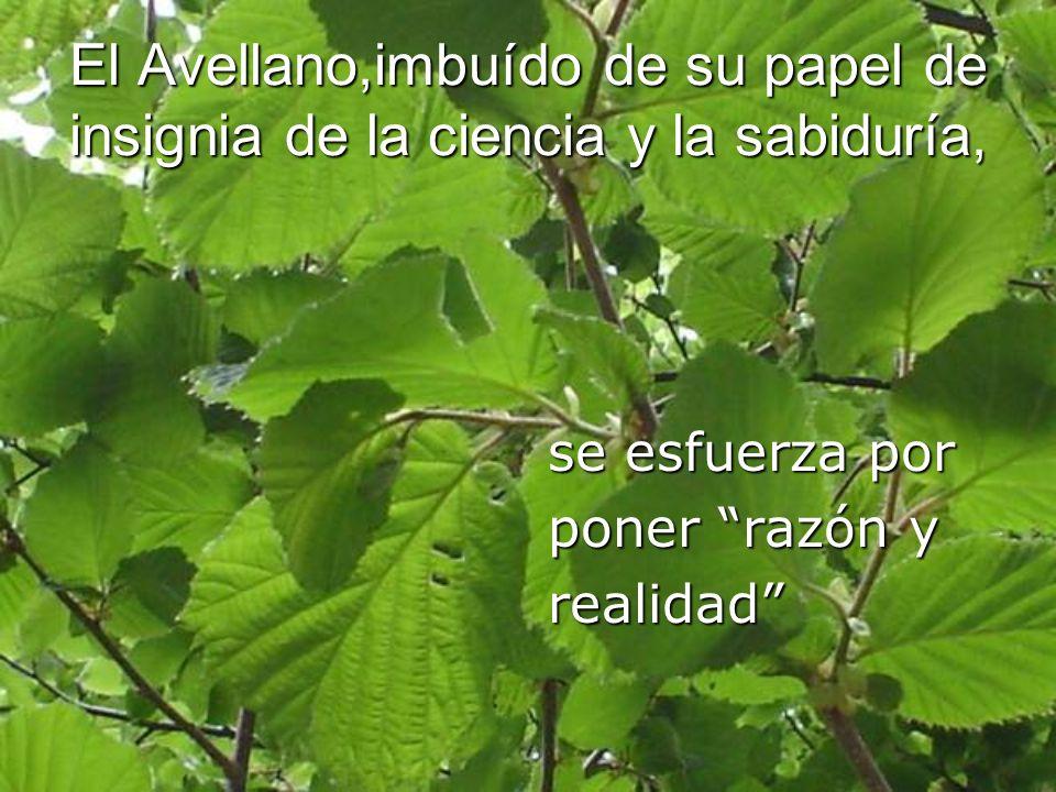 El Avellano,imbuído de su papel de insignia de la ciencia y la sabiduría, se esfuerza por poner razón y realidad
