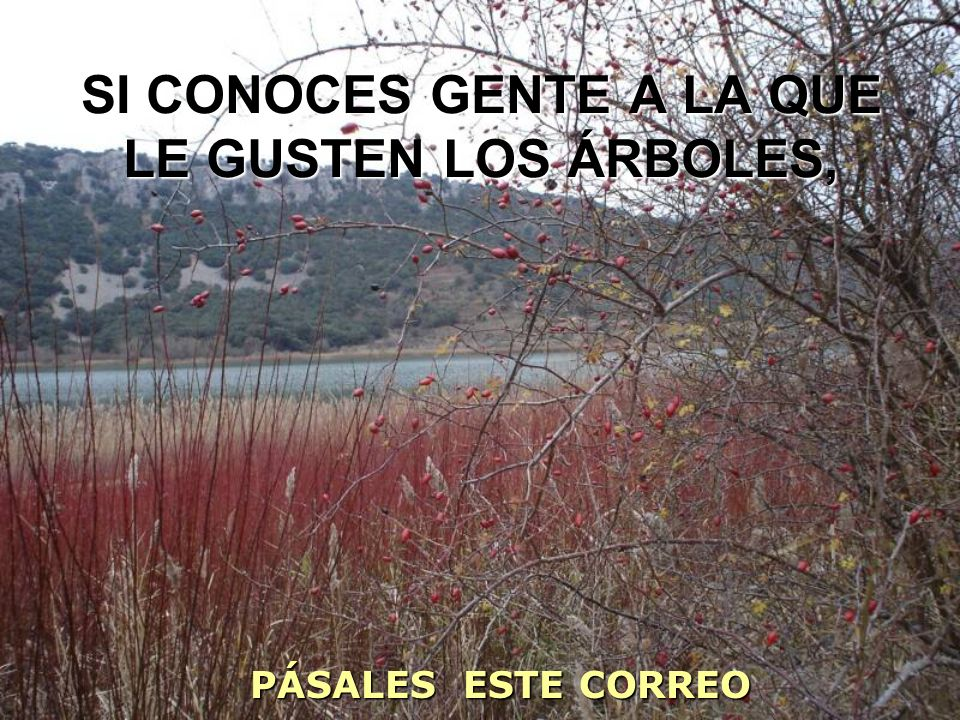 SI CONOCES GENTE A LA QUE LE GUSTEN LOS ÁRBOLES, PÁSALES ESTE CORREO