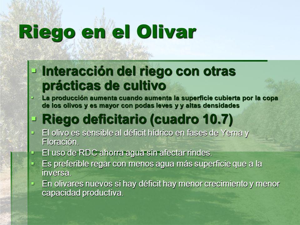 Riego en el Olivar Interacción del riego con otras prácticas de cultivo Interacción del riego con otras prácticas de cultivo La producción aumenta cua
