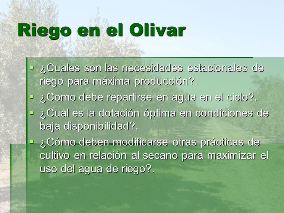 Riego en el Olivar ¿Cuales son las necesidades estacionales de riego para máxima producción?. ¿Cuales son las necesidades estacionales de riego para m