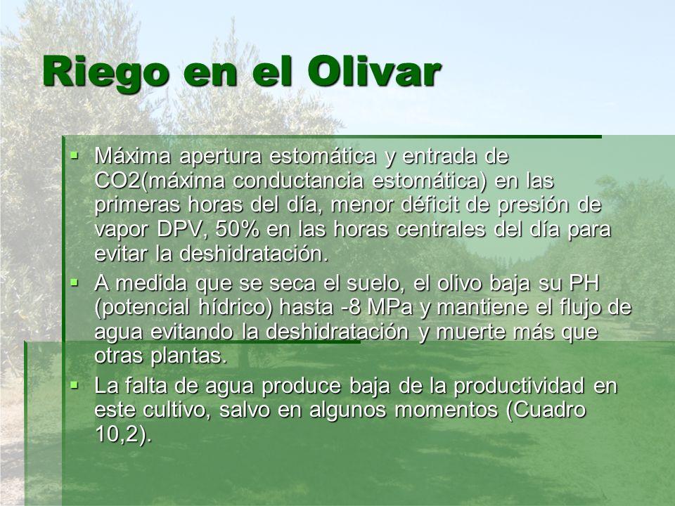 Riego en el Olivar Máxima apertura estomática y entrada de CO2(máxima conductancia estomática) en las primeras horas del día, menor déficit de presión