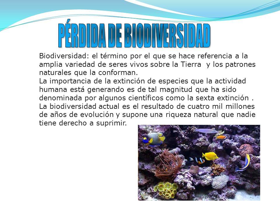 Biodiversidad: el término por el que se hace referencia a la amplia variedad de seres vivos sobre la Tierra y los patrones naturales que la conforman.