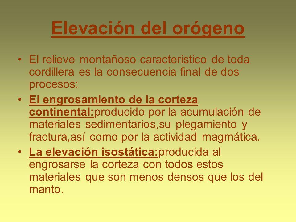 Elevación del orógeno El relieve montañoso característico de toda cordillera es la consecuencia final de dos procesos: El engrosamiento de la corteza